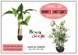 Arbres Exotiques de différentes tailles disponibles dans notre boutique Flora Déco
