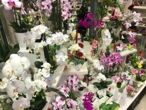 Composition de fleurs pour l'interieur Flora Déco pour tous les budgets