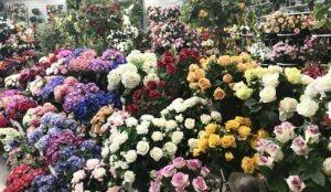 Compositions de plantes fleuries artificielles fabriquées par Flora Déco, rosiers, hortensia, pivoines