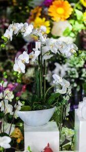 Coupe d'Orchidées Deluxe Artificielles Flora Déco pour l'intérieur