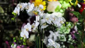 Des coupes d'orchidées Blanches ou Wanda à tous les prix dans la boutique Flora Déco