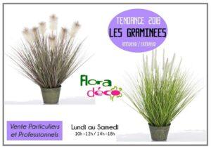 Des plantes Graminées Tendances à découvrir chez Flora Déco