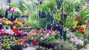 Grand Choix de fleurs artificielles toute l'année chez Flora Déco