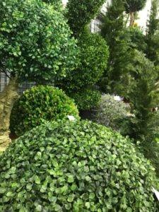 Le Buis Artificiel tendance pour votre maison à retrouver dans votre boutique Flora Déco