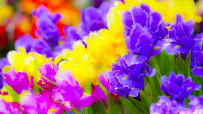 Flora Déco, Spécialiste des Fleurs Artificielles