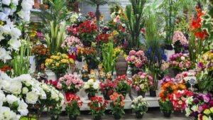 Les Plantes Fleuries et Arbres Fleuris sont a decouvrir en grand nombre chez Flora Déco