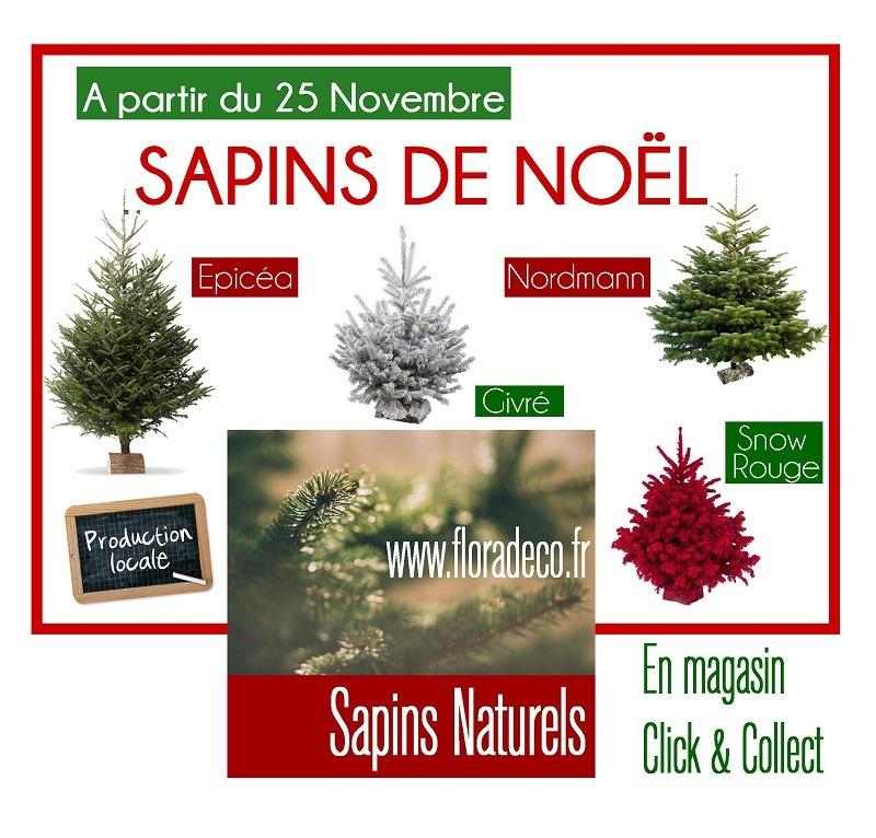 Sapins de Noel Naturels chez Flora Déco
